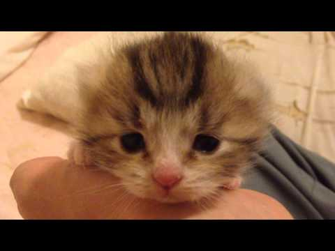 10秒で癒される猫動画 baby cat SO CUTE!!