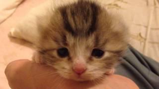 【かわいすぎて反則】子猫のつぶらな瞳に心奪われる…