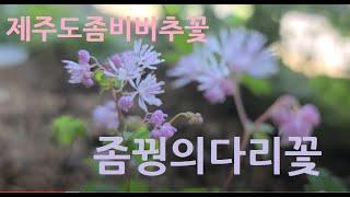 6월의 테라스 야생화~ 와인쥐손이,좀비비추, 좀꿩위다리…