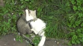 Драка котов жесть! 123