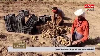 البطاط في مأرب : انتاج وفير في ظل غياب الدعم الرسمي    تقرير عمر المقرمي