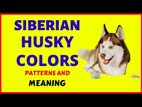 ❤️️SIBERIAN HUSKY COLORS► Patterns and the Meanings BEHIND THE COATS