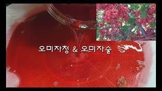 #오미자청만들기#오미자술만들기#오미자효능/ Omijac…
