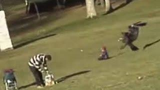 Aguila agarra a un niño pequeño y lo levanta del suelo unos metros . Pudo acabar en tragedia