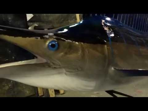 Sailfish Mount Gray Taxidermy Fish Mounts
