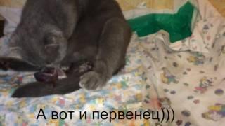 Моя кошка рожает