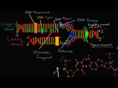 Leading and lagging strands in DNA replication | MCAT | Khan Academy