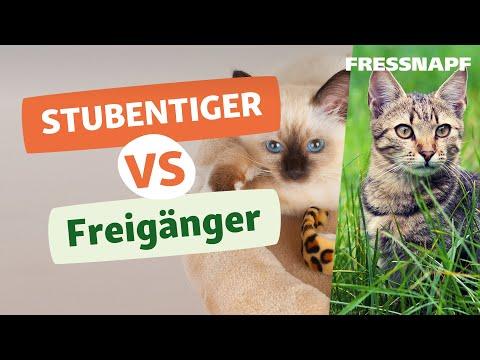 stubentiger vs freig nger wann kann die katze raus youtube