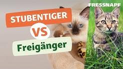 Stubentiger vs  Freigänger -  Wann kann die Katze raus?