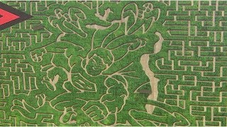 Calgary Corn Maze The 'toughest One We've Done'
