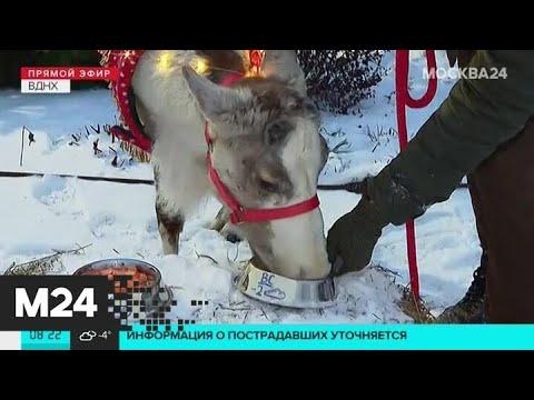 """""""Утро"""": пониженное атмосферное давление ожидается в столице 24 января - Москва 24"""