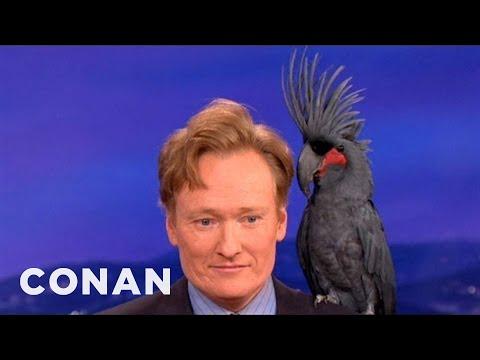Animal Expert David Mizejewski: Black Palm Cockatoo & Crocodile - CONAN on TBS