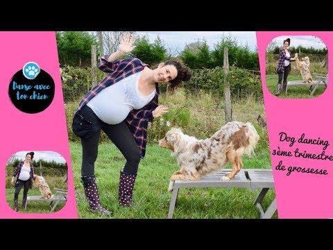 Dog dancing et enceinte jusqu'au yeux!!! 9ème mois de grossesse... #dogdancing