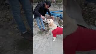 Ne varsa hayvanda var insan oğluna iyilik yapacağınıza hayvanlara yapın budur