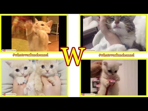 Cute Kittens and Funny Cats Compilation