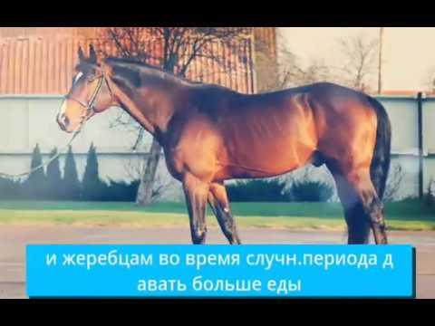 Вопрос: Как правильно кормить лошадь?
