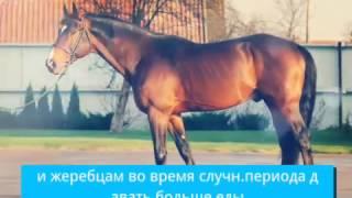 видео Чем кормить лошадь