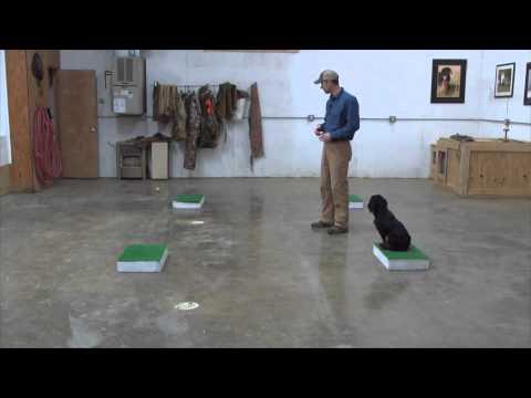 Dog Training Placeboards