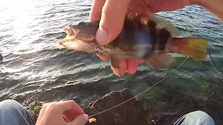 MİDYE İLE KARAGÖZ AVI BEREKETLİ SULAR  MILLS WITH FISH FISH