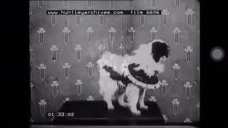 狆犬 【最古の狆の動画 1920年頃】 Japanese chin old film https://ja....