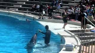 Entrega Anillo con Delfines