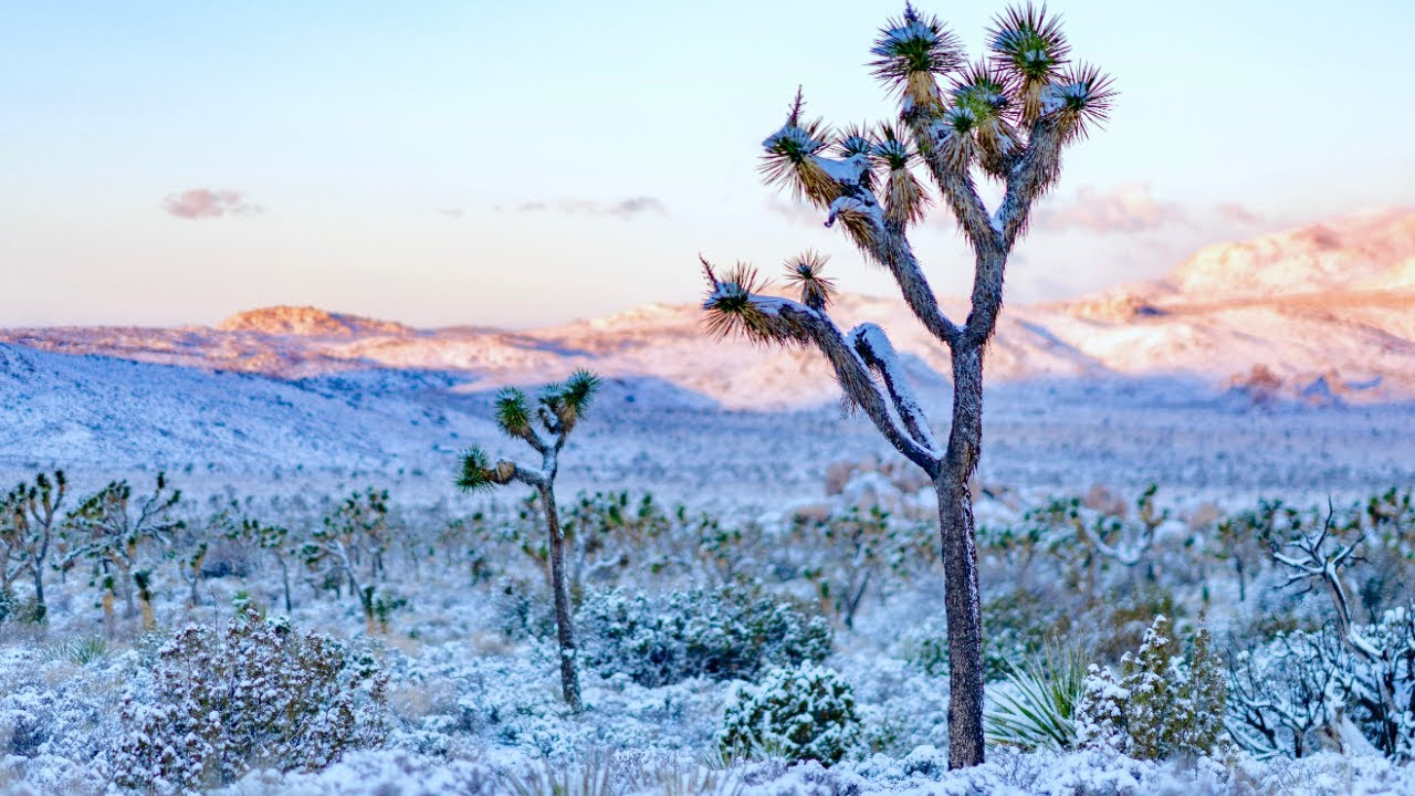 Joshua Tree National Park Covered In Snow