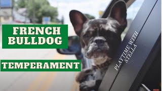 What Is A French Bulldogs Temperament?
