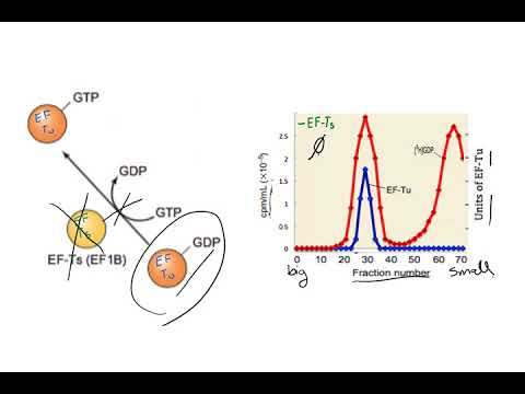 Figure 18.17 Determining the guanine nucleotide exchange properties of EF-Ts