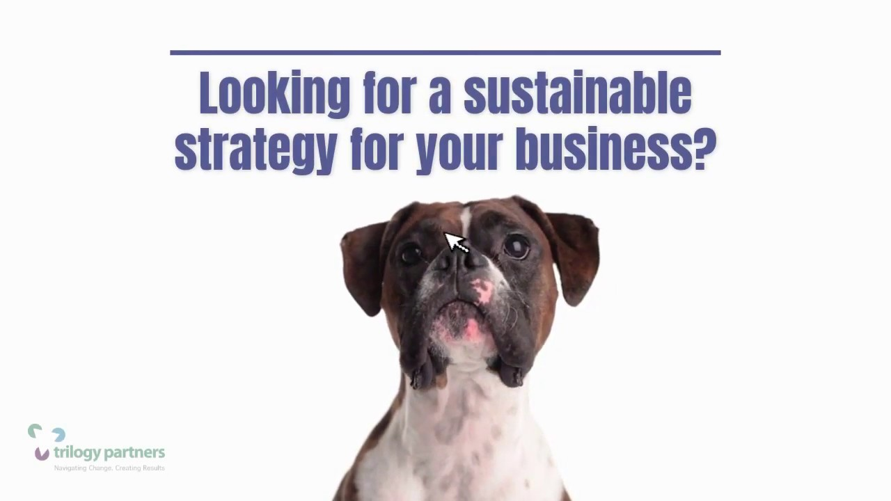 Looking for a Business Strategy? Trilogy Partners LLC