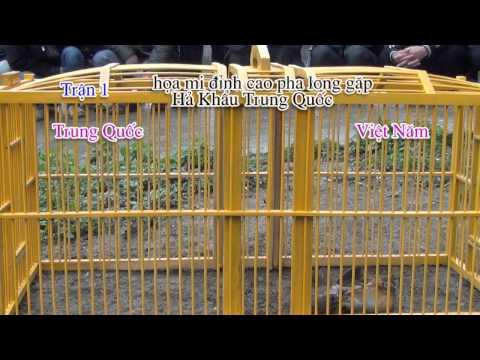 Hoa Mi Dinh Cao pha long gặp chim Hả Khẩu trung quốc