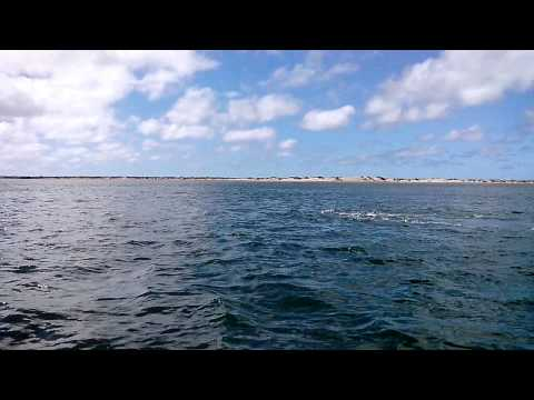 Puerto Adolfo Lopez Mateos, Baja California, Mexico: Balena