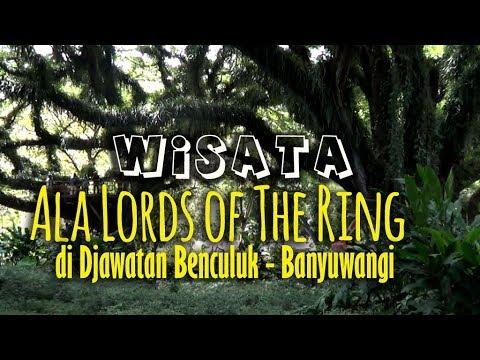 Wisata Ala Lords Of The Ring Di Djawatan Benculuk Banyuwangi