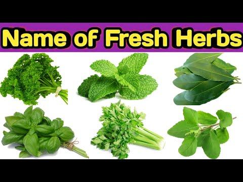 Types Of Fresh Herbs || Name Of  Herbs || Herbs Ke Naam || Rss Kitchen