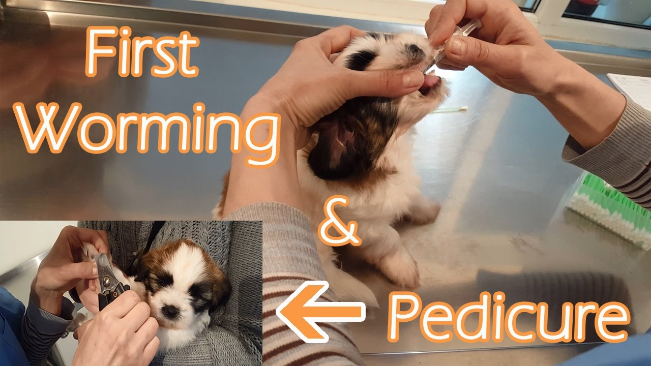 First Worming Of A Puppy Youtube