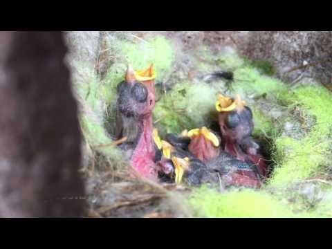 6 Blue tit chicks die in my nest box in worst year ever 2016 Nurturing  Nature