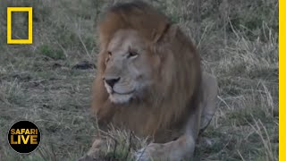 Safari Live - Day 230 | National Geographic
