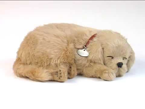 Golden Retriever Dog Stuffed Animal Perfect Petzzz That Actually
