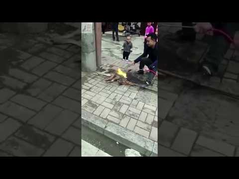Dog Burned Alive Blowtorched China Cruel Asia Dog Meat Trade Abuse Yulin Festival Torture Kill