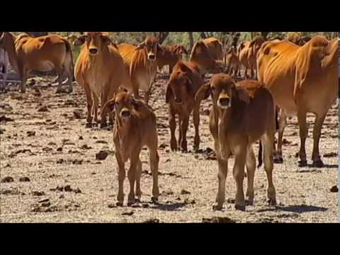 2017 delivers the biggest drought ever recorded in Queensland history