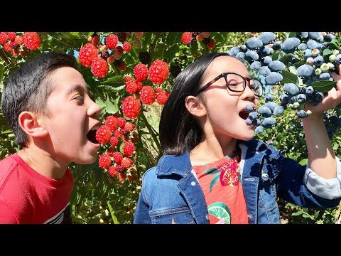 Berry Picking!!! All You Can Pick At The Best Berry Farm!!!