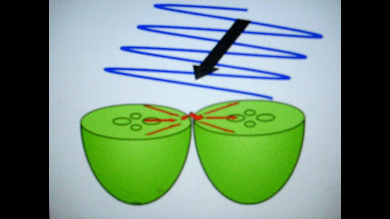 Microwave + Grape = Plasma - YouTube