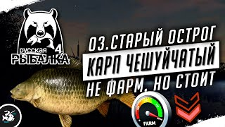Русская Рыбалка 4 Карп чешуйчатый на озере Старый Острог
