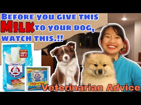 How To Make Puppy Milk Homemade Youtube