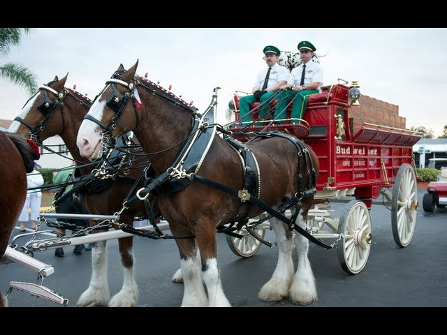 Budweiser Clydesdales singing at Sun-N-Fun