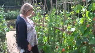 Growing and Eating Runner Bean Flowers