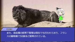 バーバリライオン(Panthera leo leo)は、食肉目ネコ科に属するライオ...