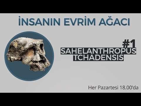 Sahelanthropus tchadensis | İnsanın Evrim Ağacı #1