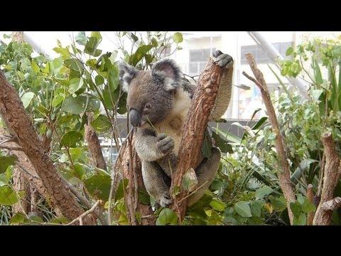 Wild Life Zoo & Sea Life Aquarium in Sydney