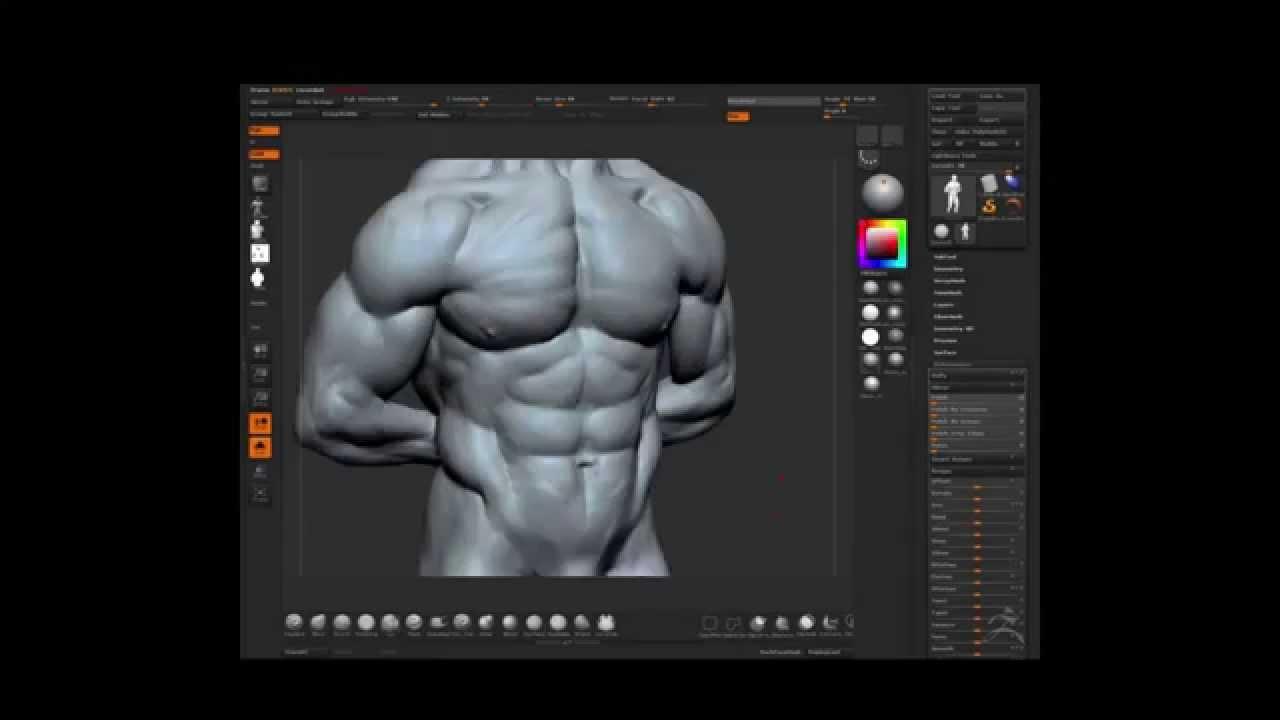Zbrush speed sculpt - torso - anatomy study - YouTube