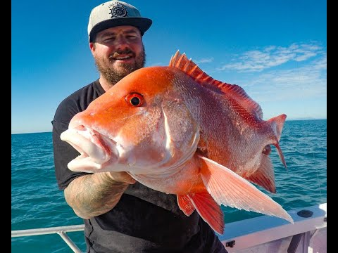 JIGGING CORAL TROUT/ RED EMPEROR AND NANNYGAI IN NORTH QUEENSLAND